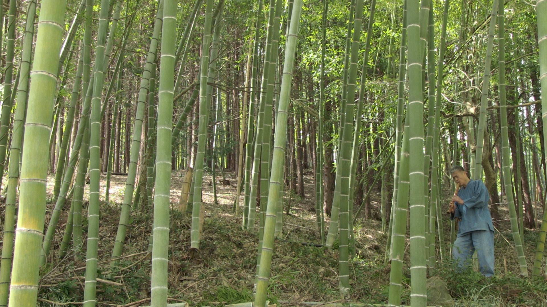 Fukushima bamboo Ohashi plays.JPG