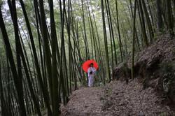 fukushima moms procession scene the umbrella girl in bamboo forest BEAUTIFUL.JPG