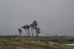arahama town wiped out with windswept trees.JPG