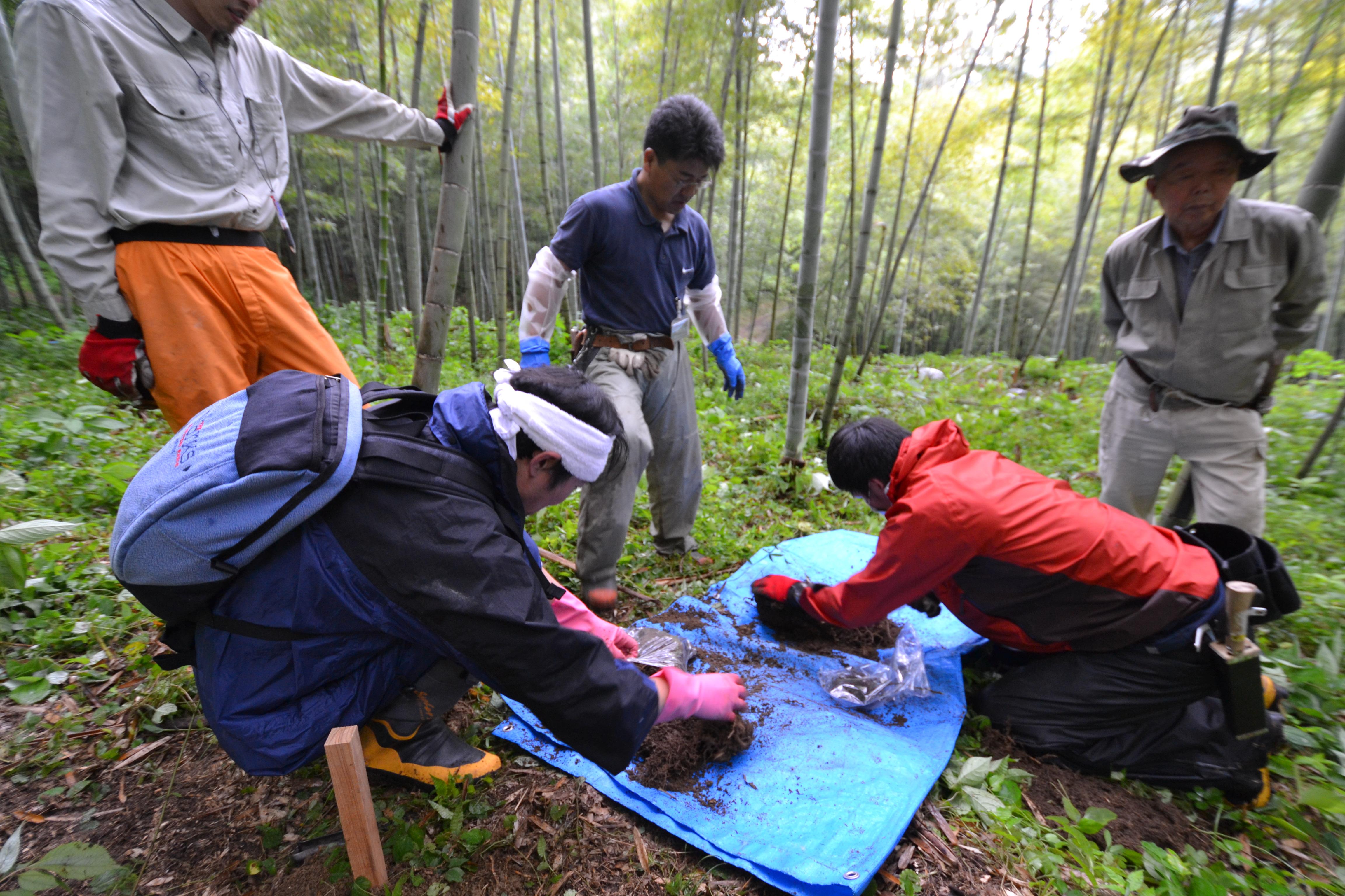 marumori bamboo farm contamination testing.JPG