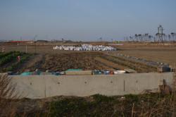 arahama village land the removing salt water soil.JPG