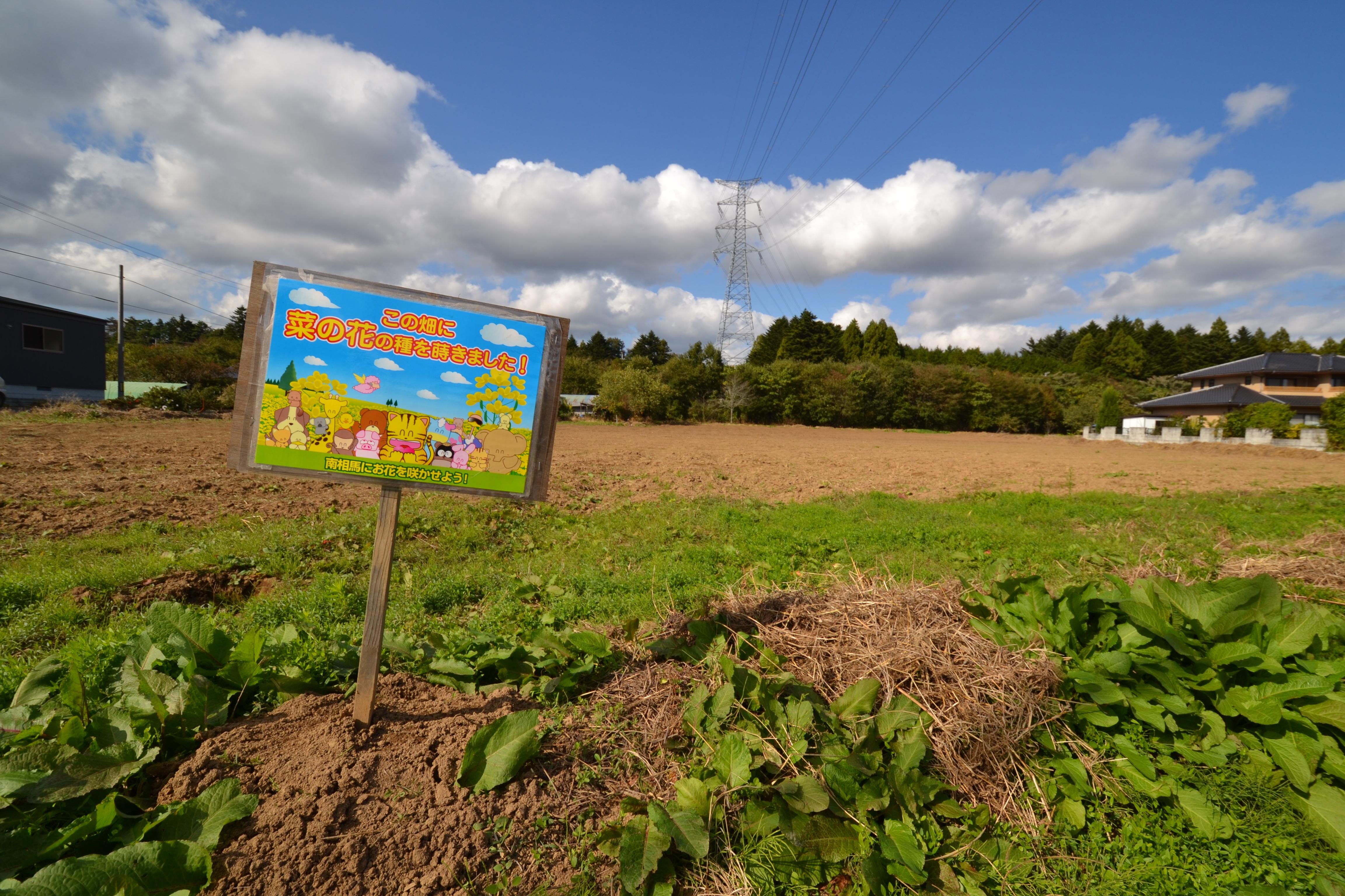 odaka sunflower field sign Let the flowers bloom.JPG