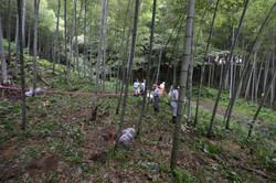 marumori bamboo farm contaimination check.JPG