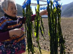 otsuchi grandma hanging wakame to dry 2016.JPG
