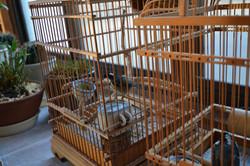 otsuchi two birds one survivor one companion.JPG