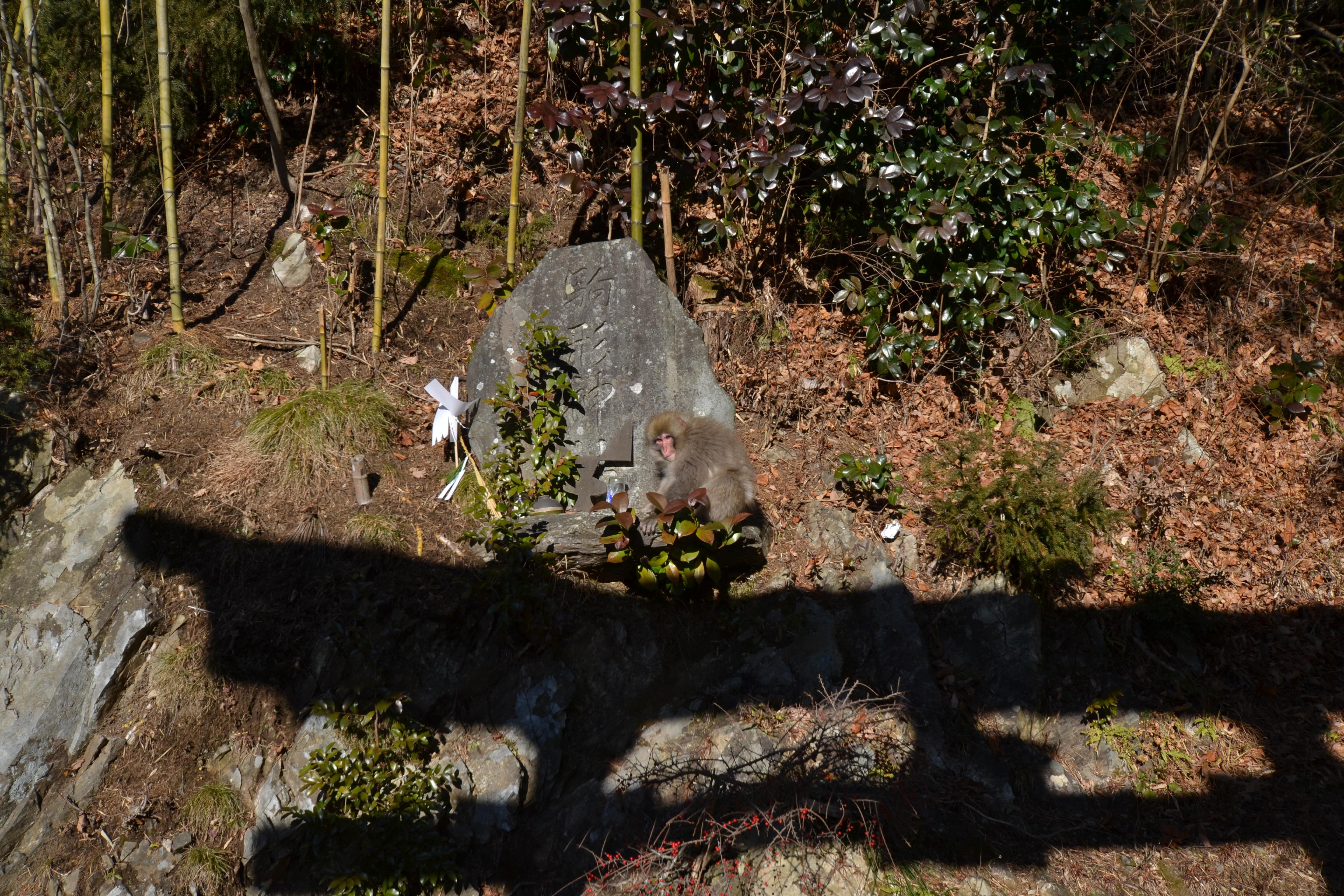 otsuchi new years day monkey at shrine.JPG