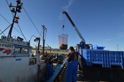 watari bringing in a catch of salmon.JPG