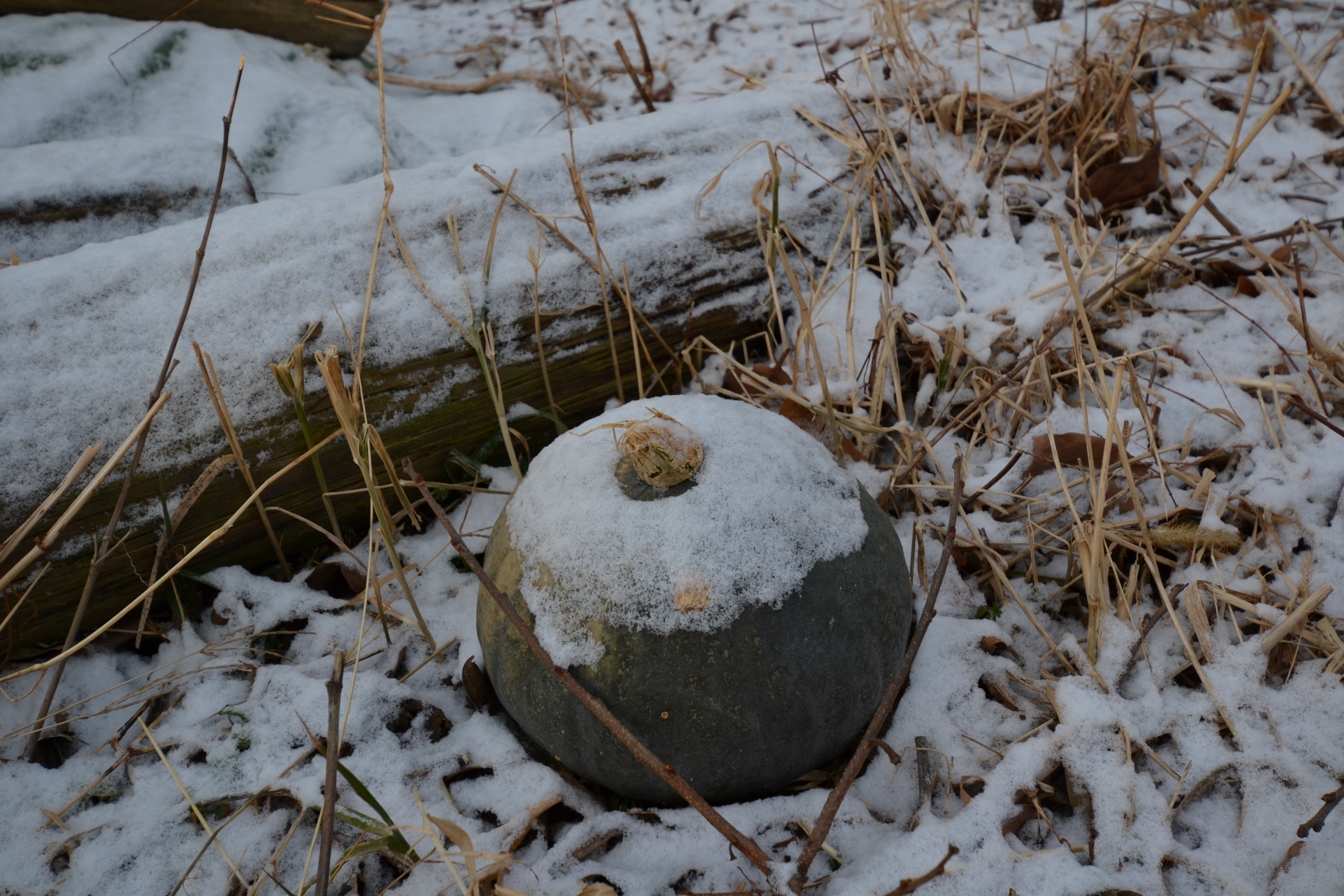 otsuchi winter the forgotten ones.JPG