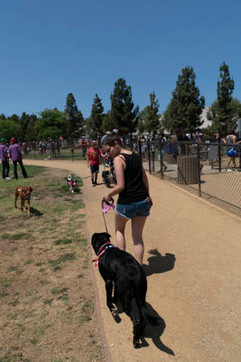 2018 0704 RPV EastView Doggie Parade Photos-02532.jpg