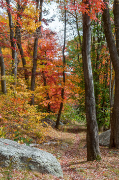 010 10 PA Fall BM trail-4267.jpg