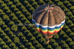 2016 03 A Balloon Affair Collection-8124