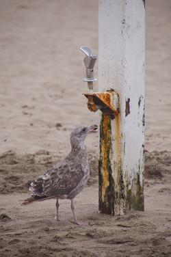 Detwiler_Thirsty Bird