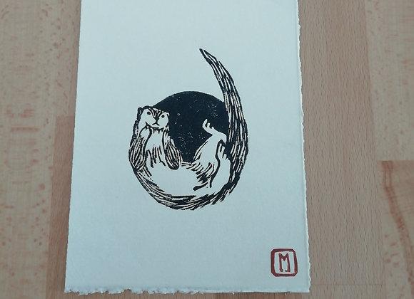 Lontra felina