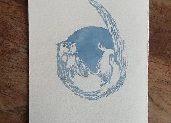 Lontra felina bleu