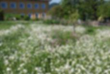 Blumenwiese Wildblumen Insektenparadies