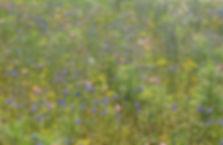 Blumenwiese Juli12.jpg