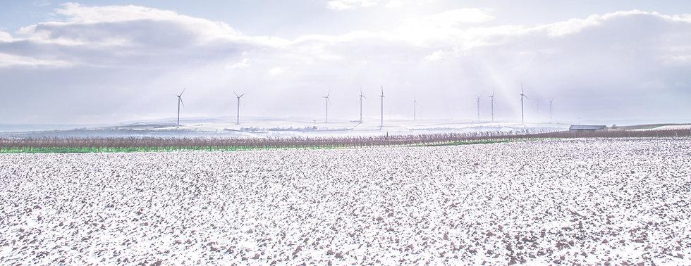 cottonfarm-(1).jpg