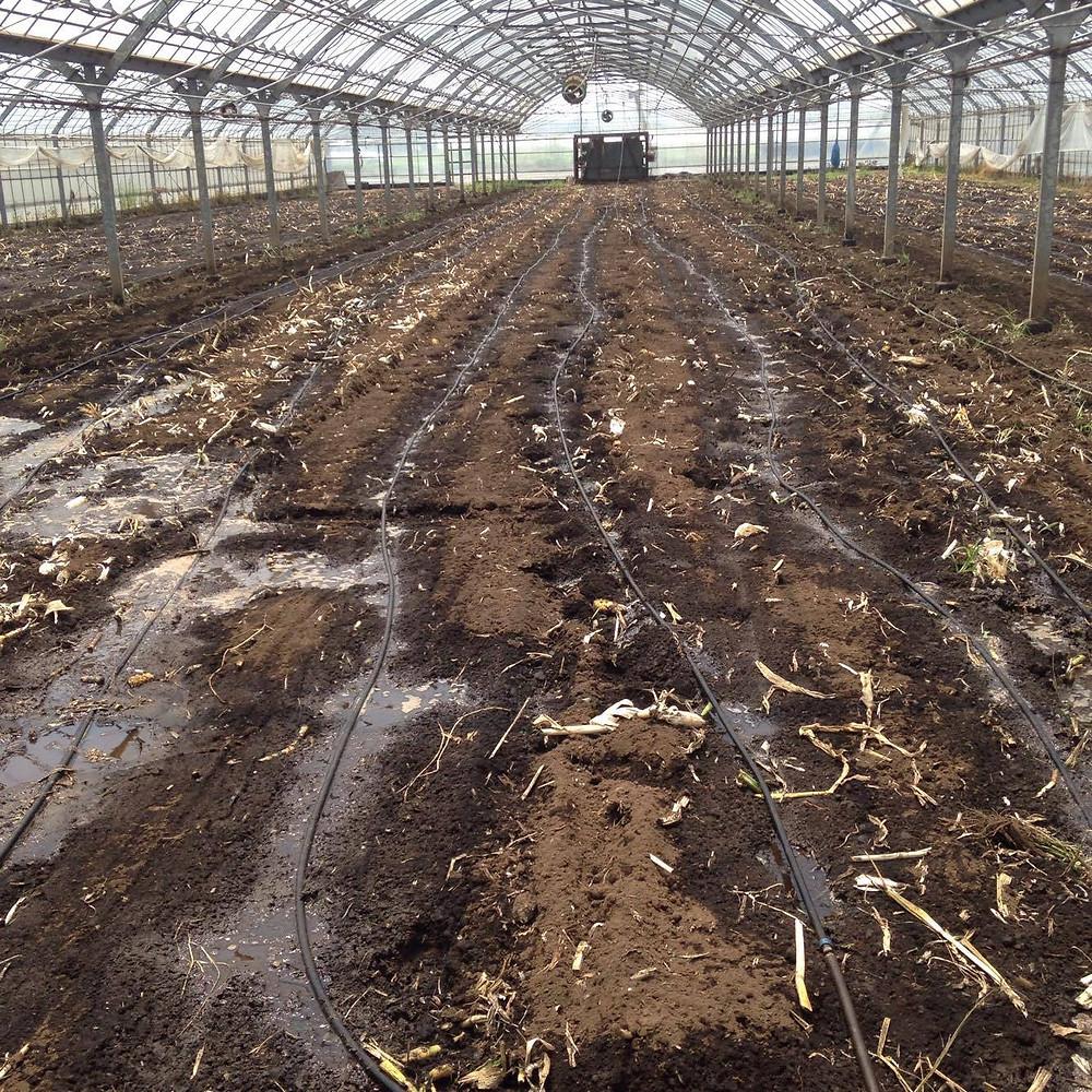 トマト作り再開に向けて土づくりをスタート