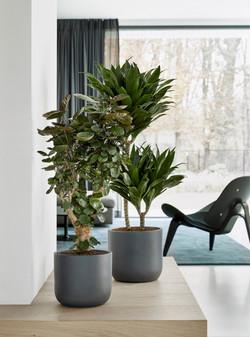 Desk Top Grey Natural Collection