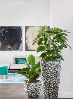 Elegant Natural Collection