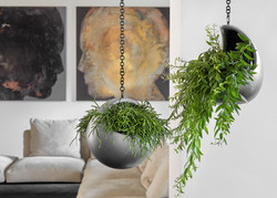 Unusual Hanging Displays Natural Collection