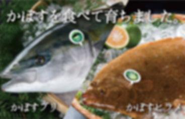 かぼすブリヒラメ-01.jpg
