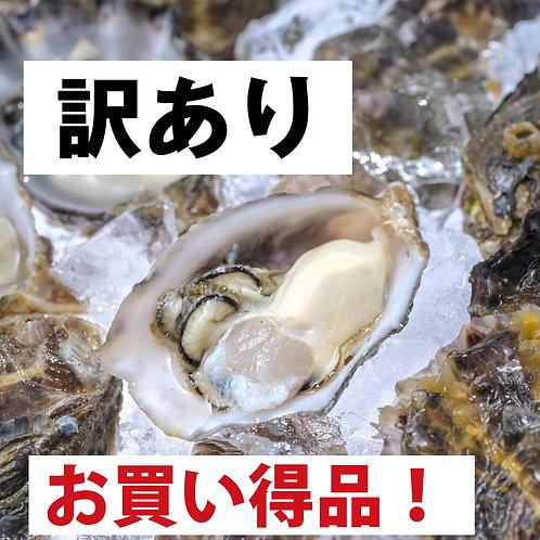 【訳あり】佐伯真牡蠣 1kg 約25~35個前後 鶴見産 シングルシード ヴァージンオイスター