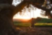 Girl-on-Swing-Under-Tree-Watching-Sunris