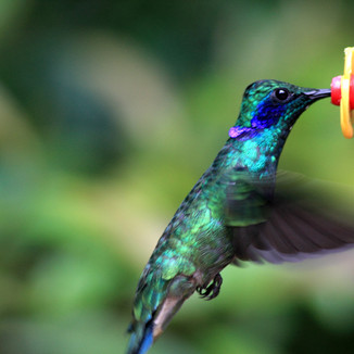 We're Hummingbird fans!