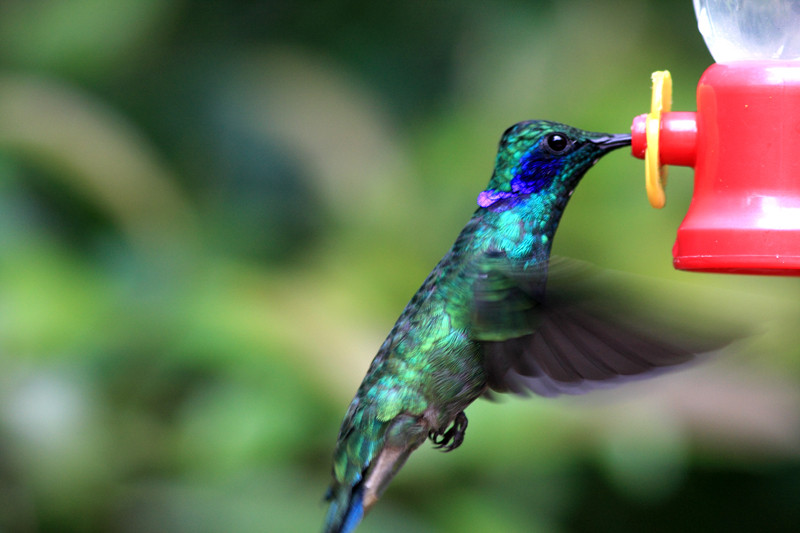 Google's Hummingbird update made long-tail keywords even better, as this image illustrates in an amusing way
