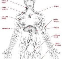 Lymphatic Massage Hands vs Machine