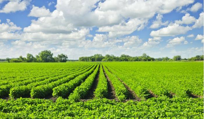 Why Regenerative Farming?