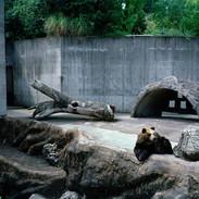 2012.9.13 とくしま動物園 008_2_1.jpgの複製