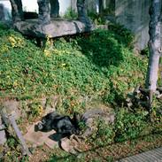 2010.11.27 福岡市動物園 014 16_20.jpgの複製