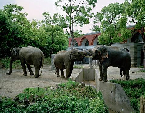 yokohama zoological gardens #27  2013