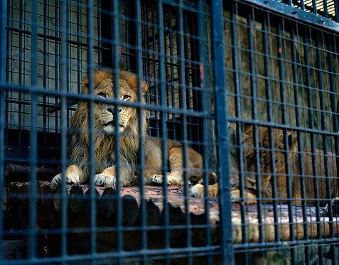 nogeyama zoo #6  2012