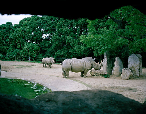 toyohashi zoo and botanical park #25 2007