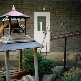 2012.10.30 浜松市動物園 026_2 16_20.jpgの複製
