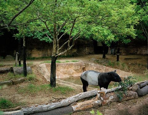 yokohama zoological gardens #1  2013