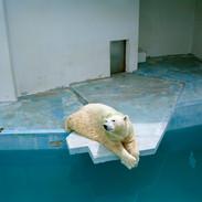 2012.8.27 周南市徳山動物園 012 16_20.jpgの複製