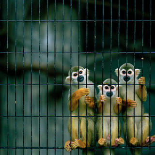 2007.10.17 静岡市立日本平動物園 025_1.jpgの複製