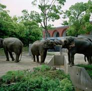 2013.5.16 よこはま動物園ズーラシア 027_3fine_1.jpgの複