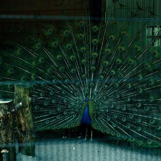 2003.5.19いしかわ動物園 021_2.jpgの複製