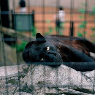 2004.7.28旭山動物園 025 16.20.jpgの複製