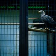 2012.10.29 姫路市動物園 020.jpgの複製
