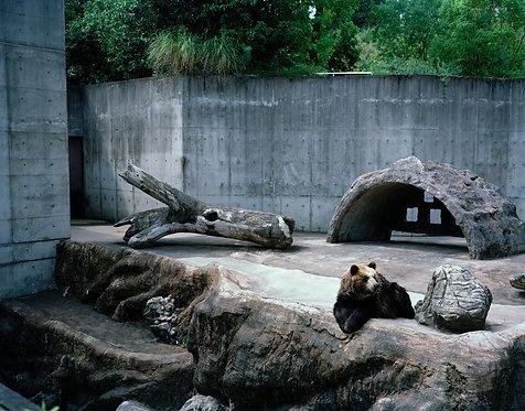 tokushima zoo #8  2012