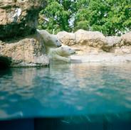 2007.10.18 豊橋総合動植物園 018_1.jpgの複製