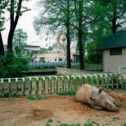 2011.4.17 熊本市動植物園 007 16_20.jpgの複製