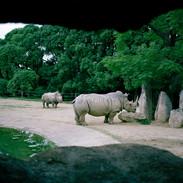 2007.10.18 豊橋総合動植物園 025-2_1.jpgの複製