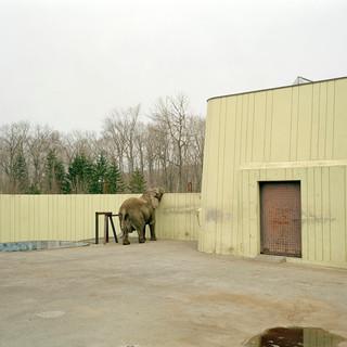 2003.5.5釧路市動物園 002 16_20.jpgの複製